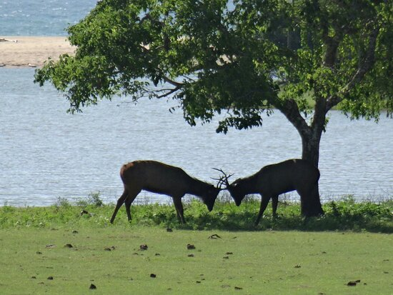 Yala Bundala Npa Safari