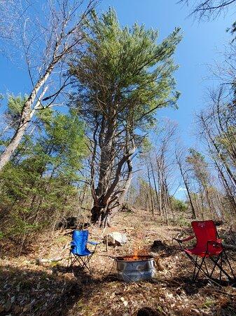 Grandmother Pine Tent Deck