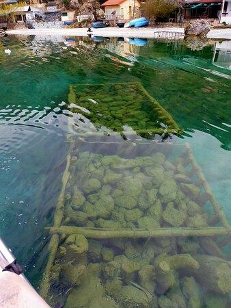 Cyrstal waters in Trpejca