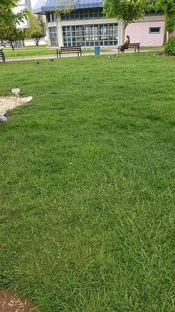 Kampus Piknik