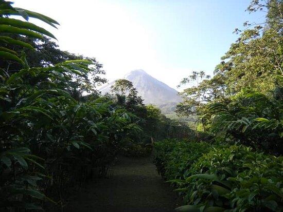 Arenal Volcano National Park, Costa Rica: Cer Ch