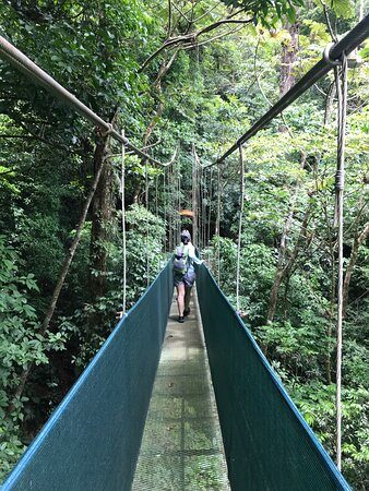Playas del Coco, Costa Rica: hanging bridge, Heliconia rain forest