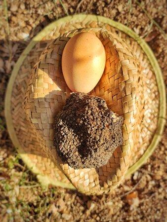 Uovo & tartufo accoppiata vincente al sapore di sottobosco