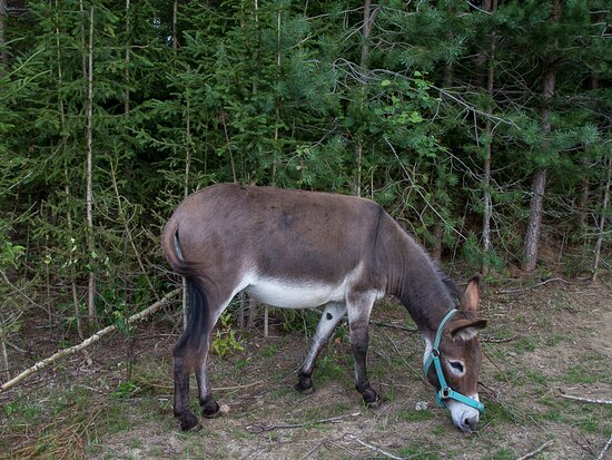 Muurame, Finland: Karoliina the donkey