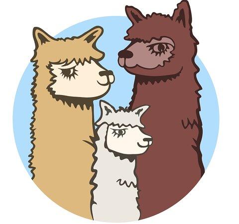 Acton Hill Alpacas