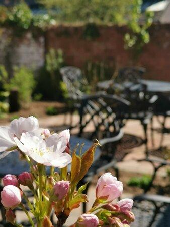 Newly finished courtyard garden
