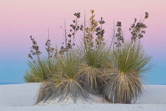 White Sands 33