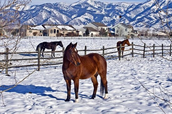 Montana, is a state in the Mountain West subregion of the Western United States. It is bordered by Idaho to the west; North Dakota and South Dakota to the east