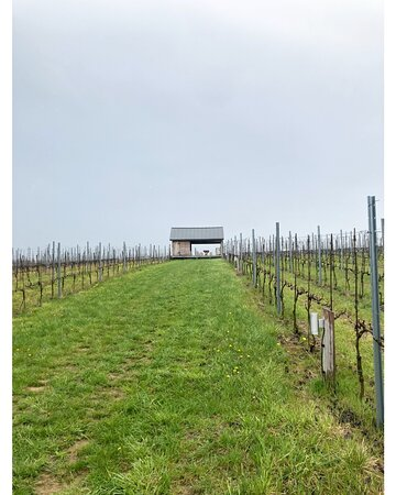 recommends visiting the vineyard