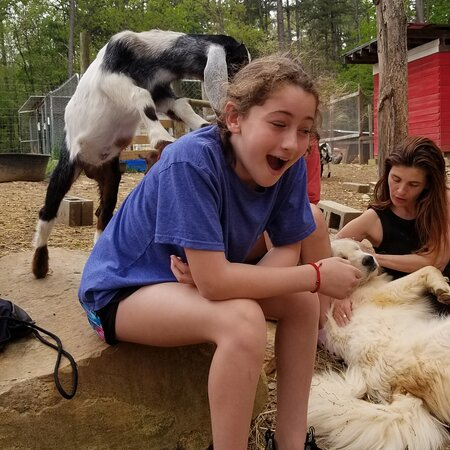 Midland, NC: Our baby goats love humans. They are friendly and very socialized. You get to spend 45 minutes in the pasture with your family, co workers or friends.   This is Flint and he found his human. Goats are like dogs they usually pick a person to love.