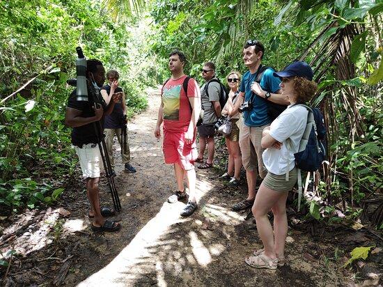 Green Cahuita animal observation tour