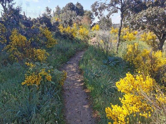 Es un placer pasear por el campo lleno de color.
