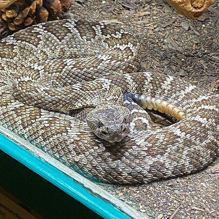 Rattlesnake Museum