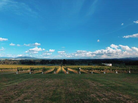 Yarra Glen, Úc: Yarra Valley Greenstone Vineyards