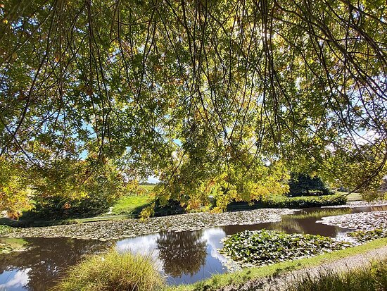 Snells Beach, New Zealand: The beautiful water lily lake at the start of the trail and outside the Brick Bay cafe