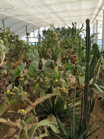 The cacti house