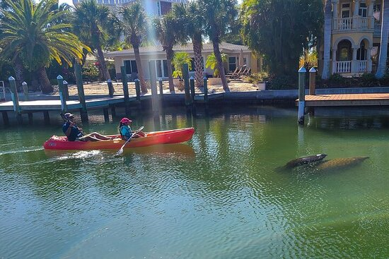 Excursion en kayak à Siesta Key