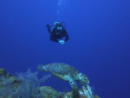 lots of turtles