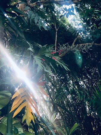 Sunlight streaming through the jungle
