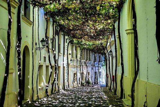 Испания: Jerez de la frontera La città  del vino
