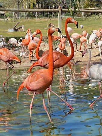 Flamengo pond