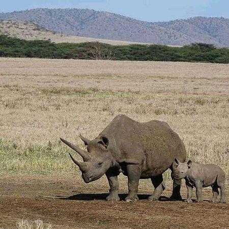محمية ماساي مارا الوطنية, كينيا: Happy mother's day to all mother's around the world💓💓