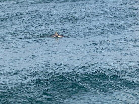 Sunset & Dolphin Catamaran Cruise in Panama City Beach: Dolphins
