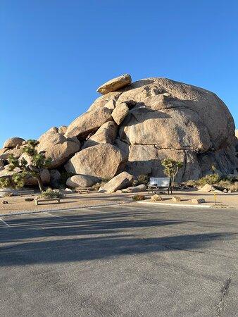 Full Day Hike in Joshua Tree National Park: Picture of Cap Rock at Joshua Tree National Park