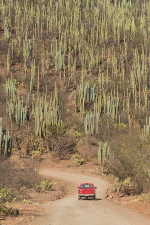 Si vous aimez les déserts de cactus, vous prendrez la route avec votre guide privé francophone en direction de Oaxaca. Le spectacle est inoubliable.