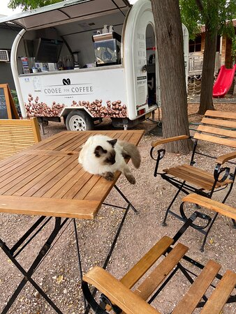 Great coffee cart in Wilcannia opposite the river.