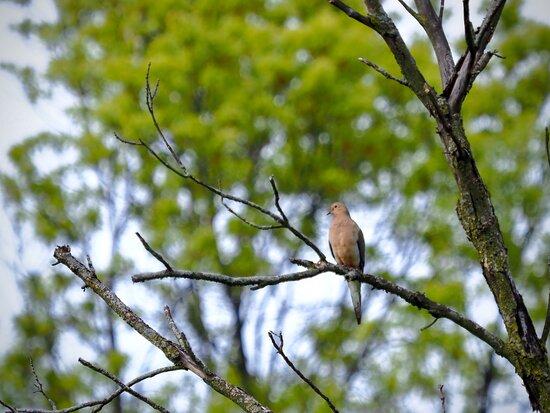 Great spot for birdwatching