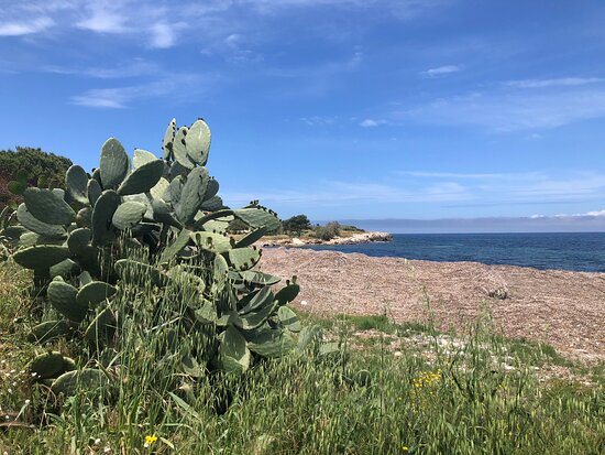 Bonagia, Italia: Fichi d'India e Poseidonie ( spiaggiate ) ....