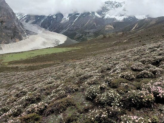 welcome to Kangshung valley or east face of Mt.Everest round circuit trekking,one of the best highlights trekking place in Tibet , Itinerary : strat from  Lhasa End to Lhasa or Kyirong border Duration :11Nights 12Days and 14 nights 15 days, Itinerary : Lhasa-gyantse-shigatse-Shegar-khada-8days trekking -Mt. Everest-lhasa or kyirong border,