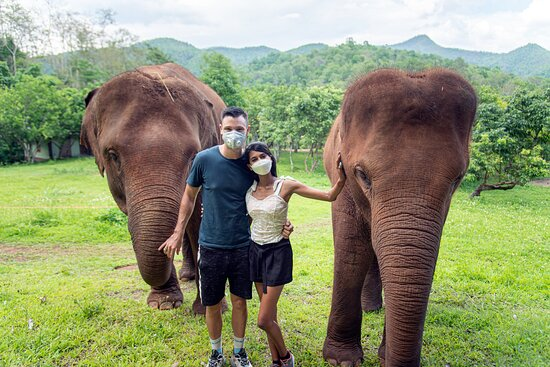 Mae Wang, تايلاند: Beautiful, happy and hungry elephants, they were really cute and amazing to feed!