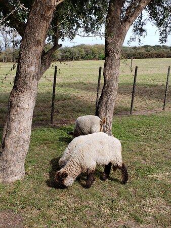 Santa Catalina, Argentina: La granja