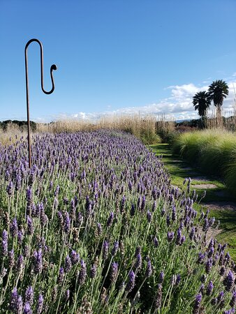 Santa Catalina, Argentina: Los jardines de lavanda, una maravilla