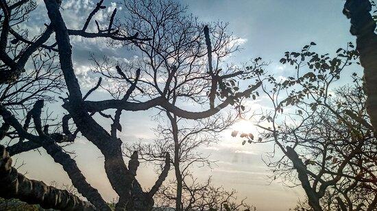 Maracaju, MS: Uma fotografia do MS, cerrado matogrossense, incrível e muito interessante.