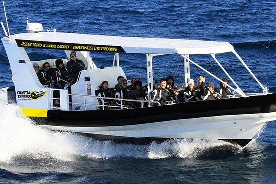 Tour de avistamiento de ballenas en Mooloolaba