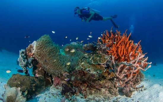 DIVING with PapuArts at World's most biodiverse reefs