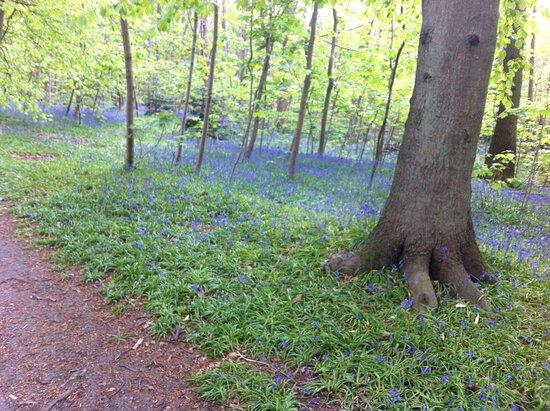 Montge-en-Goele, França: Sous-bois fleuri