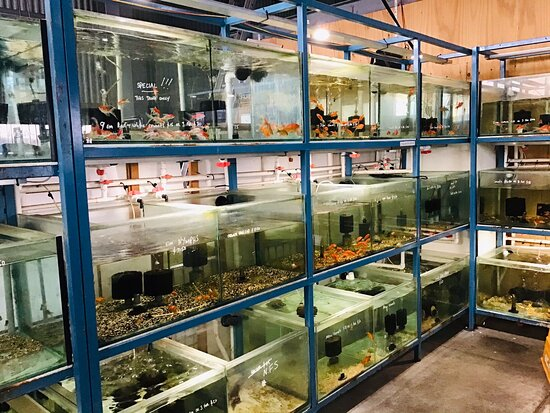 Geelong's Family Pet and Aquarium