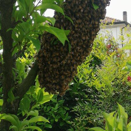 Mantua, Italy: Salviamo le api!!