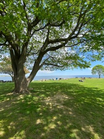 Great tree to put your beach chair down and enjoy the view.