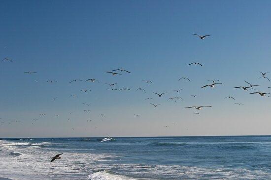 "Carpinteria Beach - Some Call it ""America's Safest Beach"""
