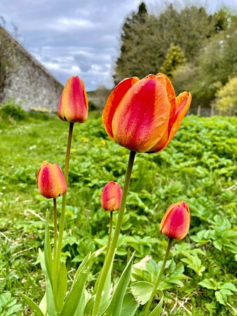 Beautiful flowers in bloom in the gardens.
