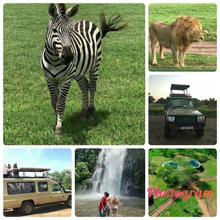 Tanzania travel booking now safari in Tanzania  thebiggmaxculturaltours is good company for you and reasonable price  karibu #hotel #Tanzani