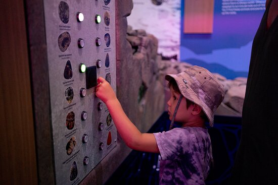 Hastings Point, Austrália: Discover a showcase of state-of-the-art light and sound technology, fitted with interactive digital terminals and world-class marine and coastal science displays.