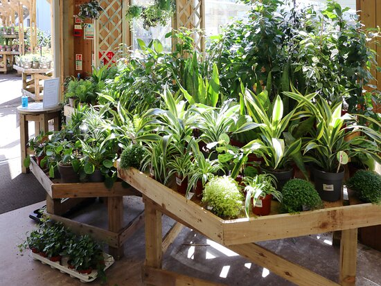 House Plants at the Woodworks Garden Centre and Café in Mold, North Wales.