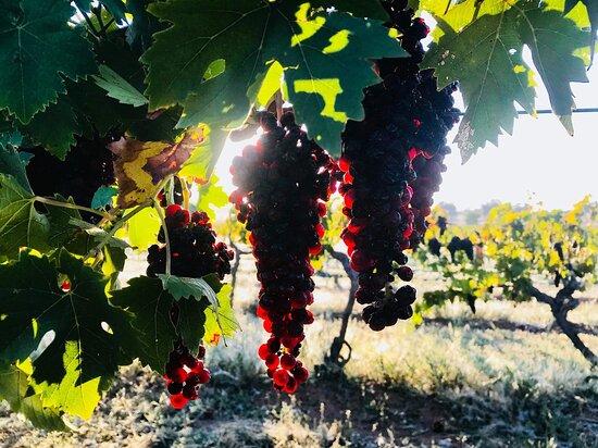 Chambers Rosewood Winery