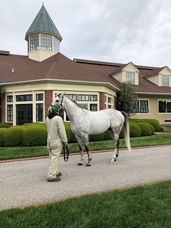 Another top sire at Lands End. What a beauty.